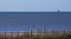 Pelicans, ducks. Shrimp boat flying sea birds on Gulf of Mexico Stock Footage