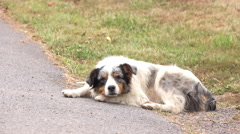 Old and rough looking dog sitting by side of street 4k Stock Footage