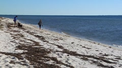 Distant couple throw stick for dog into Gulf of Mexico Stock Footage