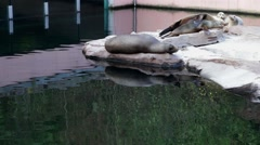 Seals resting at the zoo Stock Footage