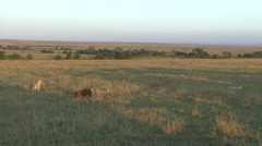 A scenic shot of cheetah and wounded wildebeest - stock footage