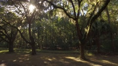 Aerial Shot Moving Back Through Ancient Oaks with Sun Poking Through Stock Footage