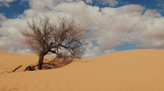 Sahara Landscape, Dunes, Wind and a Withered Tree Stock Footage