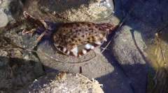 Sea Hare Stock Footage