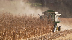 Scenes of harvesting corn Stock Footage