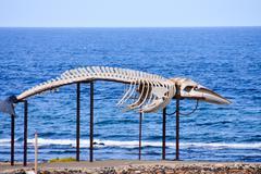 Whale Mammal Skeleton Stock Photos