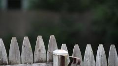 Bird Flys Off Fence plus extra clip Stock Footage