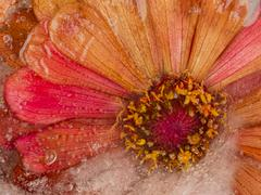 Stock Photo of abstraction with frozen flower