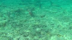Tropical underwater world, Similan Islands, Thailand Stock Footage