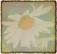 Vintage chamomile flowers background - stock illustration