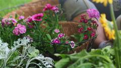 Place Flower in Hanging Basket Left Stock Footage