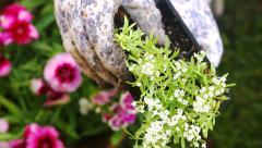 Top View Placing Flower in Basket Stock Footage