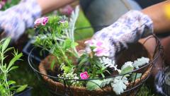 Place Flower in Hanging Basket Right Stock Footage