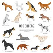 Dogs breed set Stock Illustration