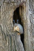 The squirrel sits in a hollow Stock Photos