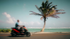 Motion-Photo (Cinemagraph) of a Palm Tree Stock Footage