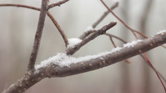 Close Up Snow On Tree Branch Snowflakes Winter Snowing Hand Held Stock Footage