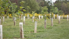 Training young trees growing in row with plastic supports 4k - stock footage
