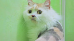 Scared Shaved Cat Looking Around Stock Footage