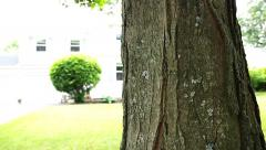 Move Down Tree Trunk Stock Footage