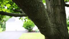 Tree Move Down Slow Motion Stock Footage