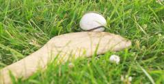 Hurley and Ball Close Up - stock footage