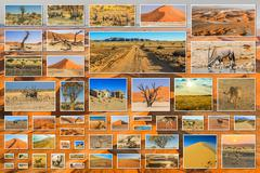 Desert pictures collage - stock photo