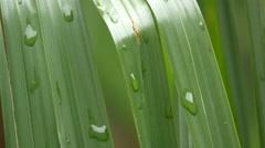 Raindrops on a leaf, Brasov Stock Footage