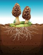 Mushroom growing from underground Stock Illustration