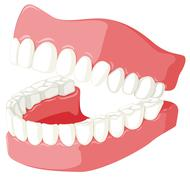 Dental theme with teeth model Stock Illustration