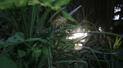 Leaves with spider web sun flares motion - stock footage