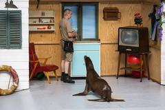 Sea lions show in the zoo of Antwerp, Belgium Stock Photos