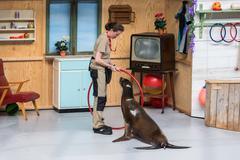 Sea lions show in the zoo of Antwerp, Belgium - stock photo