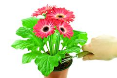 flower-growing - stock photo