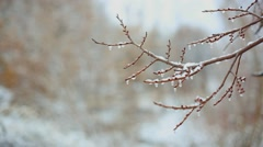 Closeup of water drops from melting snow over blurred trees background Stock Footage