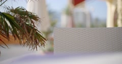Palm Branch Over Blurred Background - stock footage