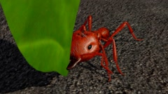 3D Animated Ant walk cycle Stock Footage
