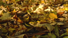 View of the ground cover in leaves, slow motion Stock Footage