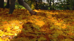 Woman walking on the forest litter in the park, slow motion shot at 240fps - stock footage