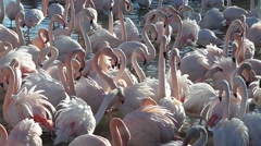 Free pink flamingo - stock footage