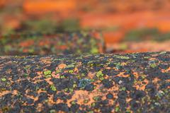 Old Tile Undulating with Lichens Stock Photos