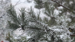 Christmas background with natural Frost. pine branch with cone - stock footage