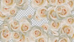 White Roses Transition with alpha channel Stock Footage