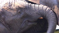 4k African elephant closeup facial expression - stock footage