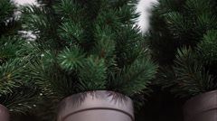 New small potted Christmas trees Stock Footage