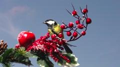 Christmas scene. Bird sitting on a Christmas Tree. Stock Footage