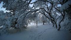 Morphing snowy tree branches fisheye lens tilt artistic Reykjavik Iceland 4k Stock Footage