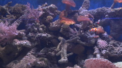 Marine fishes in the waters off Gaya Island Stock Footage