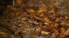 Fallen Maple Leaves, Autumn. Stock Footage