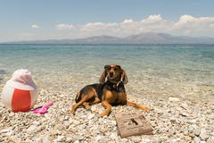 Dogs allowed on beach. A funny looking portrait. - stock photo